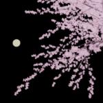 [Blender 2.8] 桜の木メイキング [アドオンを使ったモデリング]