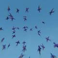 Blender パーティクルシステム エミッター 物理シミュレーション 3DCG ツバメ