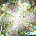 "[Blender 2.8] ""外部""の力と""自発""の力 [パーティクルシステム]"