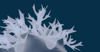 Blender 細分化 サブディビジョンサーフェス モデリング 3DCG 珊瑚